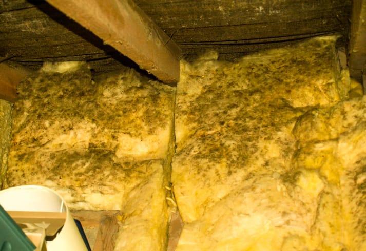 damaged insulation