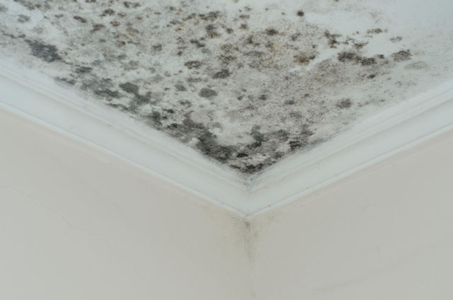 black mold removal toronto